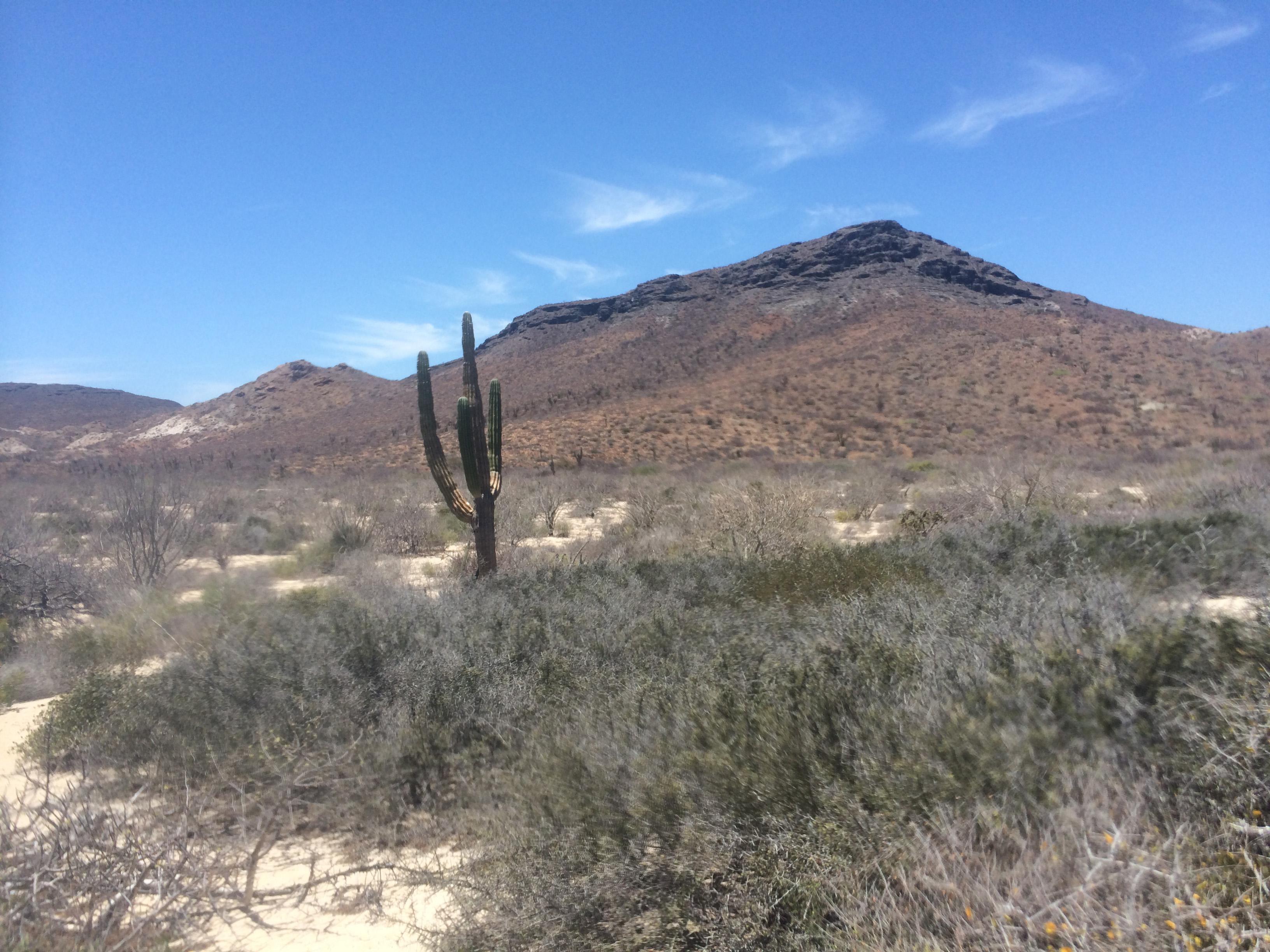 ES Desertcactus