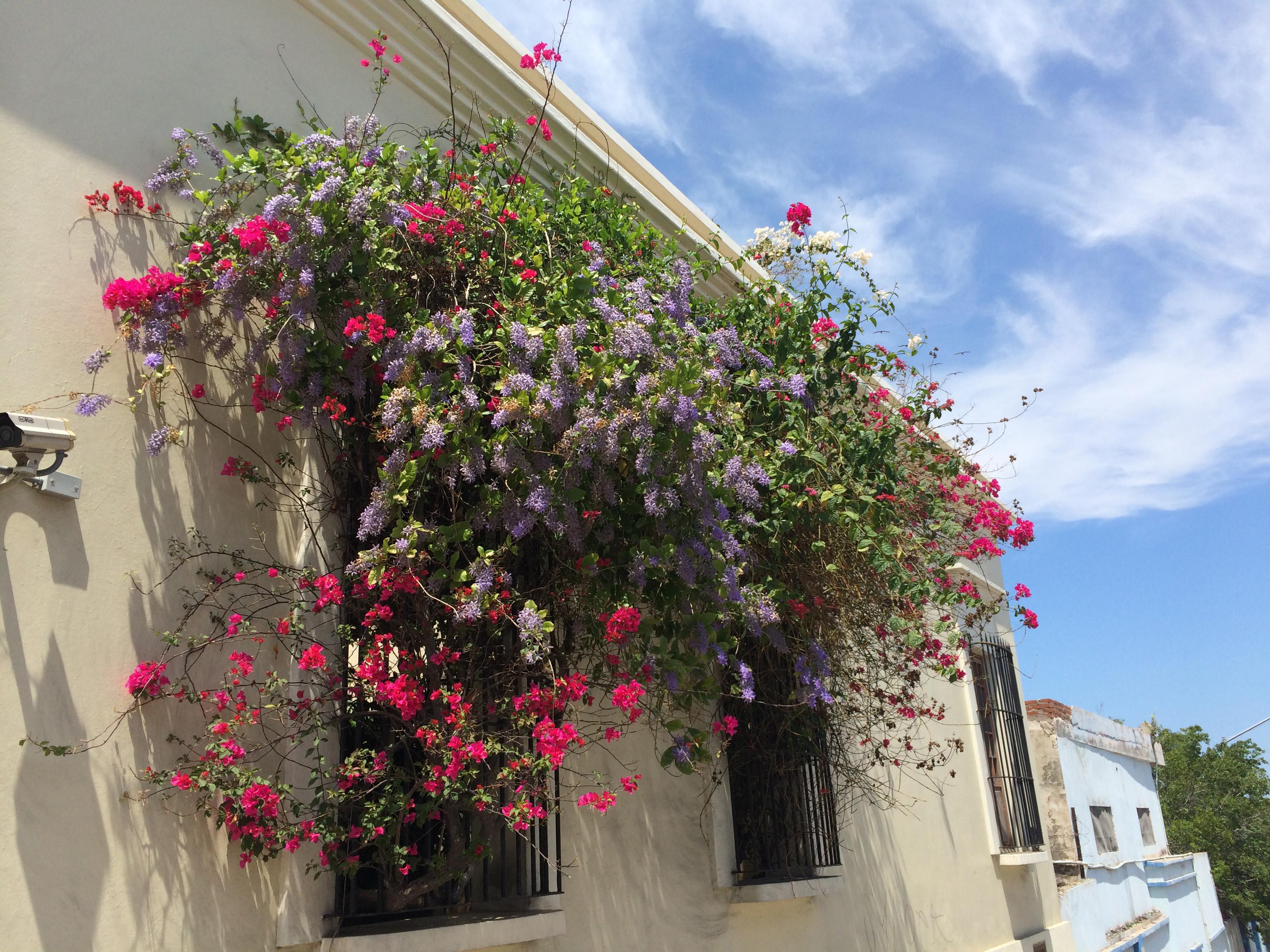 mazatlan flowers