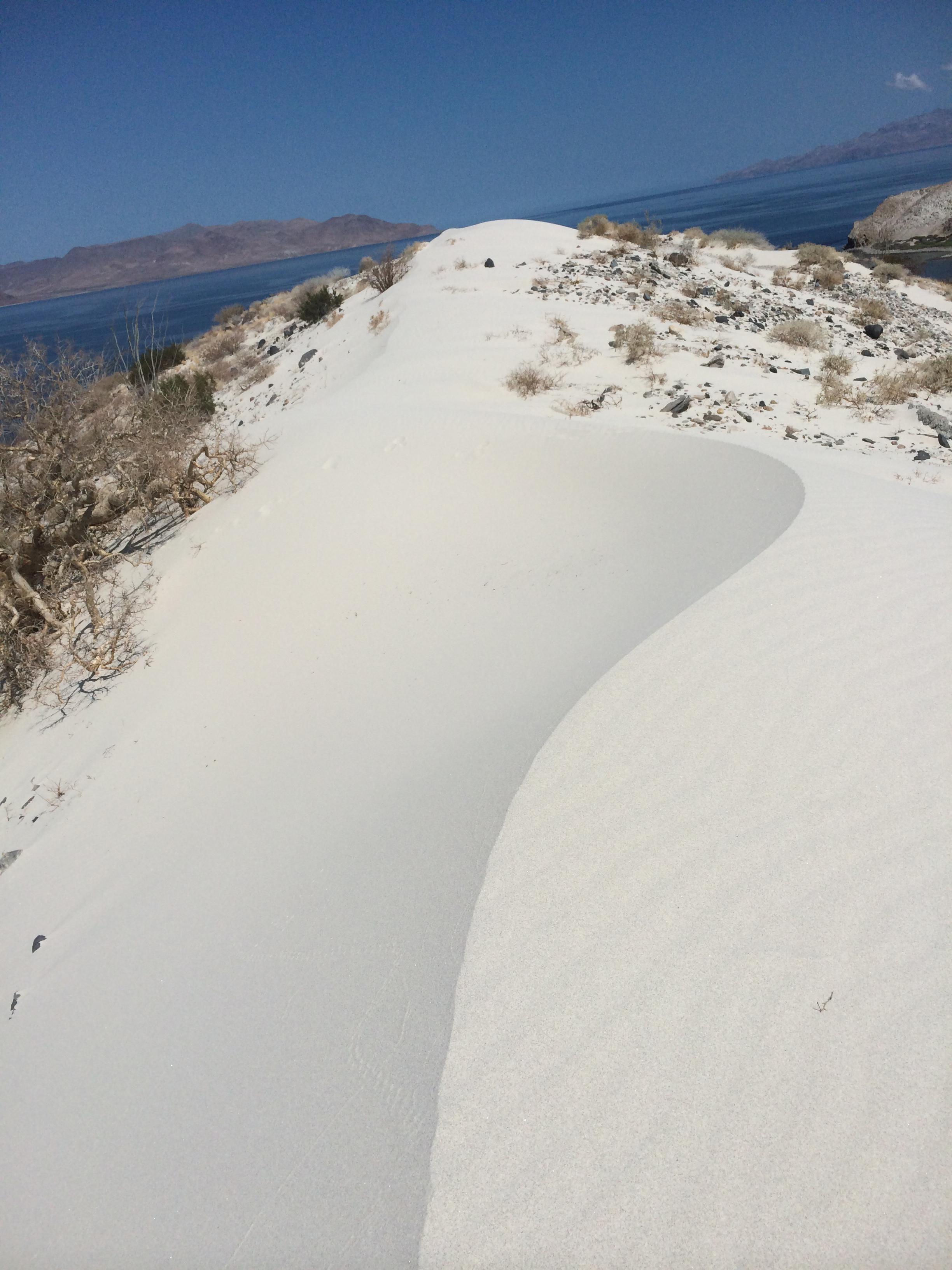 Alca Sand dune top