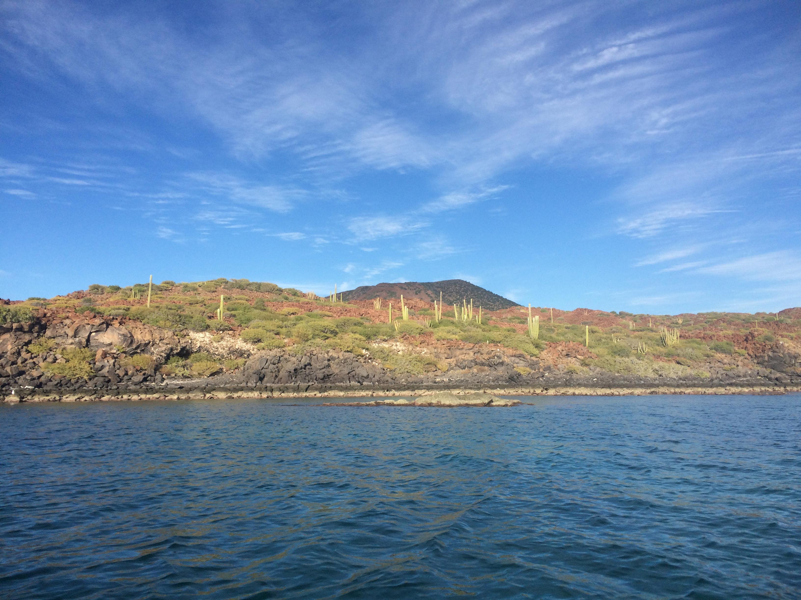 IC cactus shore view