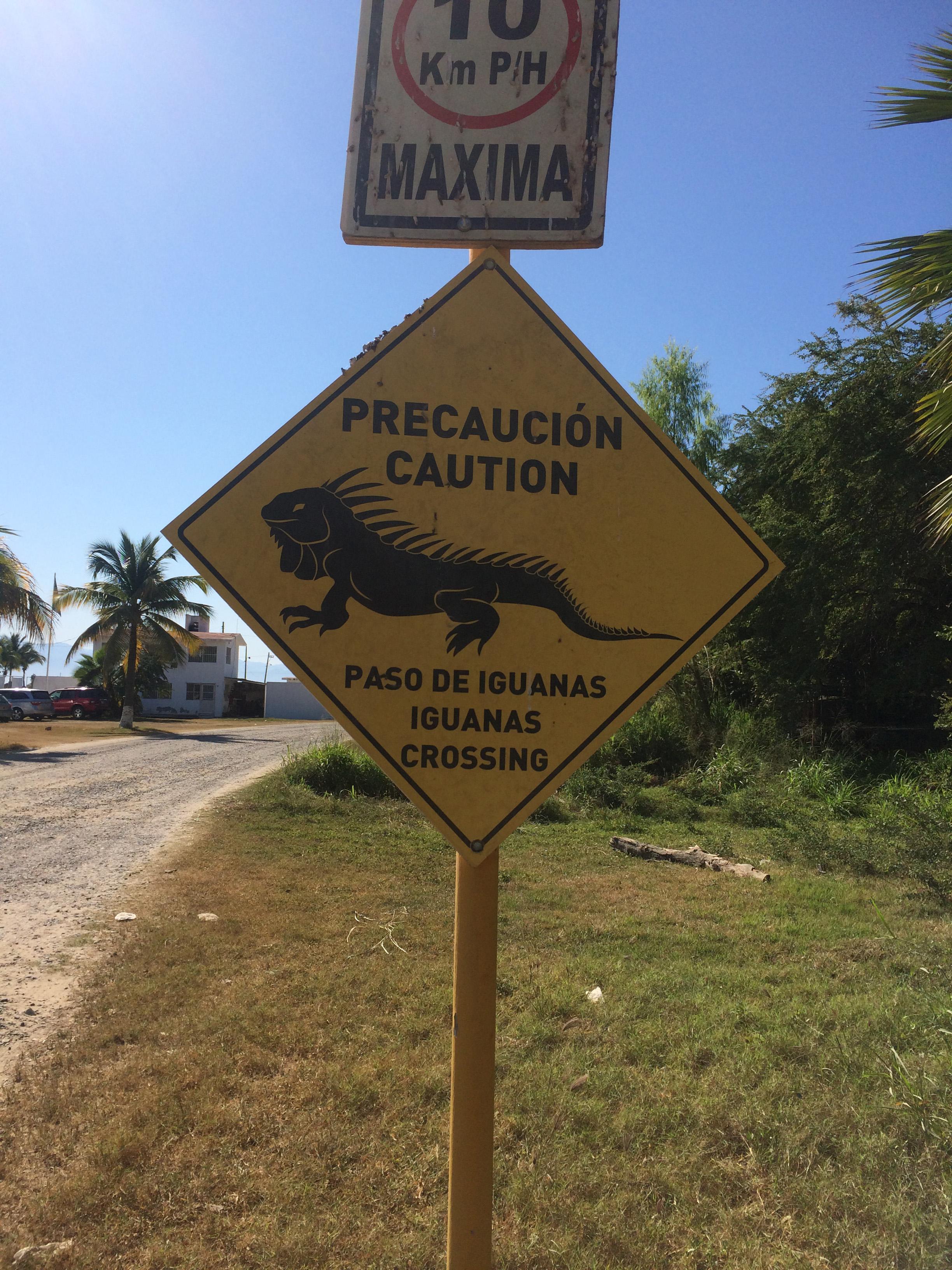 LC Iguana Sign